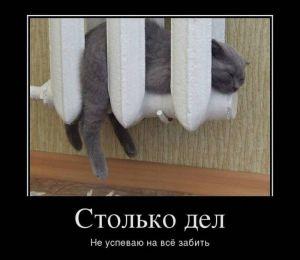 https://777russia.ru/forum/uploads/1746/thumbnail/p1a9a77rcv1srut5r1ku41v62a0c1.jpg