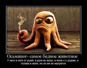 https://777russia.ru/forum/uploads/1746/thumbnail/p1a9f9842412791vcmpkc17fbvsu1.jpg